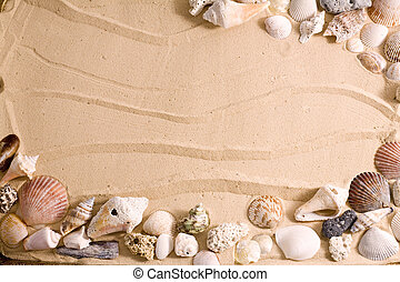 Seashell Beach Frame - Horizontal frame of sea shells over...