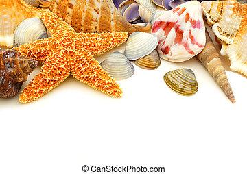 Seashell border - Colorful seashell border on a white ...