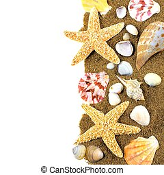 Seashell border - Vertical border of various seashells and...
