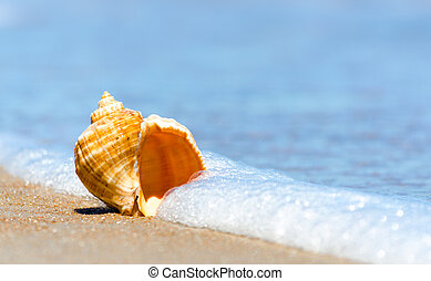 seashell closeup on the sand of a resort beach without people in Egypt