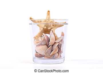 Seashell collection, isolated on the white background