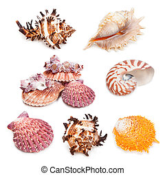 Seashell collection isolated on the white