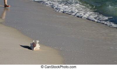 Seashell Collectors - Mature couple walking along the beach...