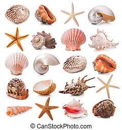 seashell, collezione