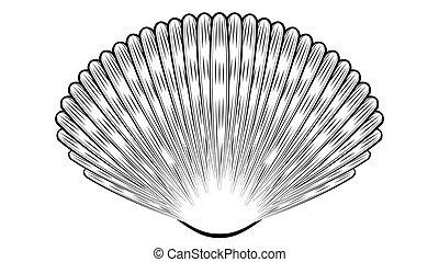 seashell, conception décorative