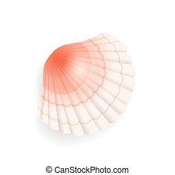 Seashell Conch Icon Closeup Vector Illustration - Seashell...