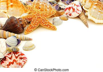 Seashell corner border - Colorful seashell corner border on...