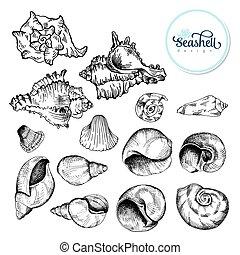 seashell, croquis, ensemble, noir
