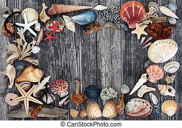 Seashell Driftwood & Pebble Abstract Background