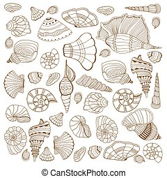 seashell, ensemble, collection