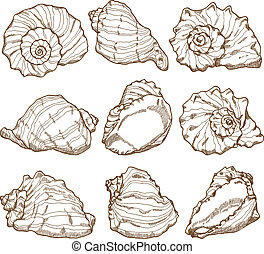 seashell, ensemble, dessin, main