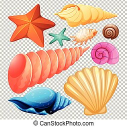 seashell, ensemble, plage