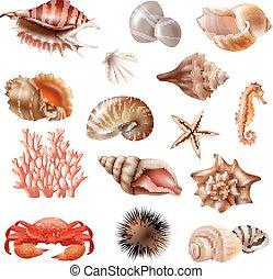 seashell, ensemble, réaliste