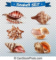 seashell, ensemble, transparent