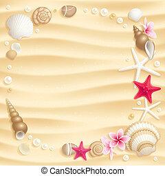 seashell, fondo