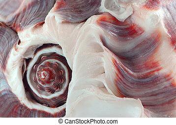Seashell fragment