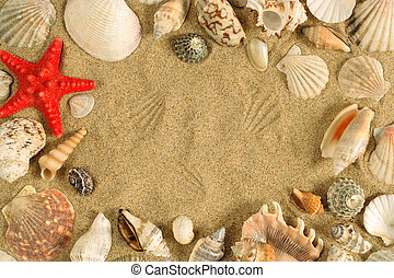 Seashell frame - A series of seashells scattered around the ...