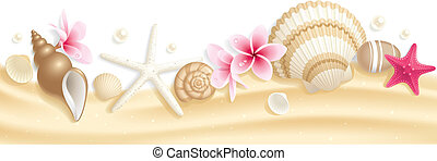 Seashell header - Summer header with seashells and ...