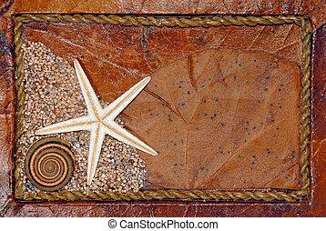 seashell, hintergrund