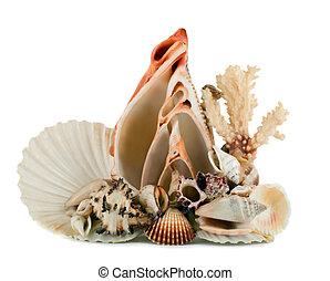 seashell in shellfish