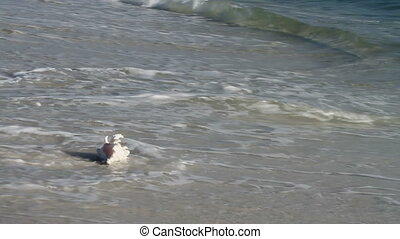 Seashell In Surf