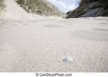 Seashell in the sand under a blue sky