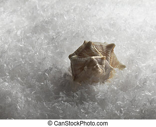 seashell in the snow