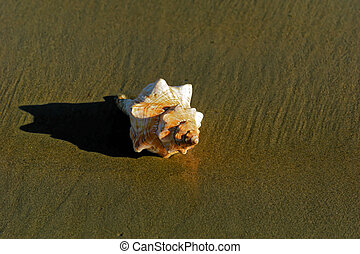 seashell in the sun