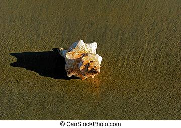 seashell in the sun