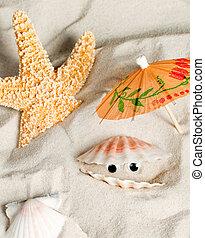 Seashell looking around