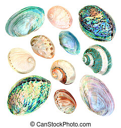 seashell, mãe, cobrança, pérola