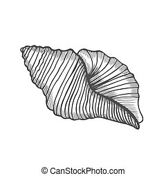 Seashell nautilus Sea shell - Seashell nautilus. Sea shell...