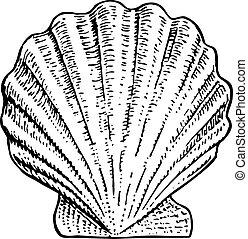Nice seashell on white background