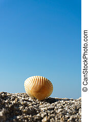 Seashell on rock