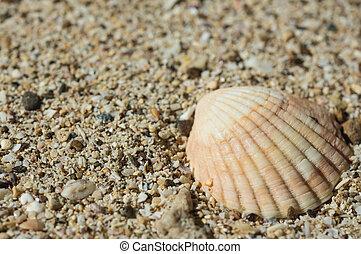 Seashell on sand close up