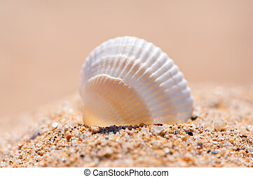Seashell on sand close up.