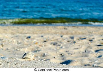 seashell on sand nea sea