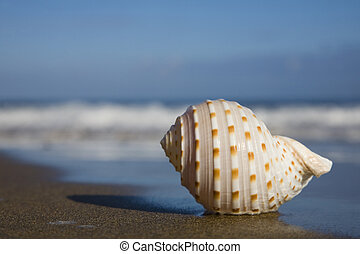 Seashell on the Beach