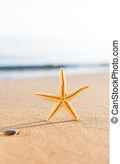 Seashell on the beach