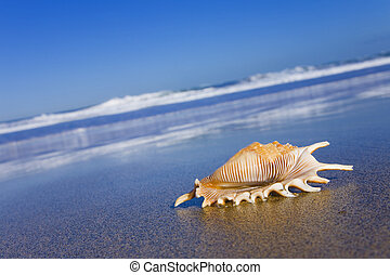 Seashell on the Bech