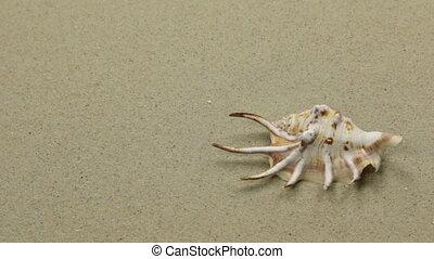 Seashell on the sand beach. Slider shot. Summer background. Copy space