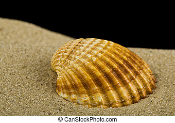 Seashell on the sand isolated on a black background