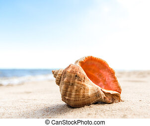 seashell on the sand of a resort beach without people in Egypt
