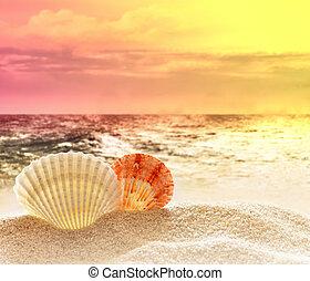 seashell on the sandy beach