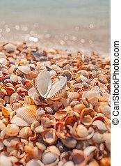 Seashell on the summer beach near sea water. Blurred...