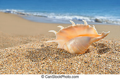 Seashell on the yellow beach sand