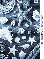 seashell on wooden background