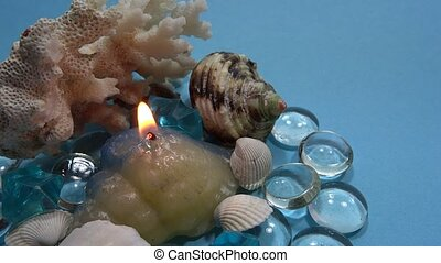 seashell ornament in blue background