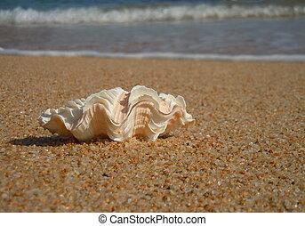 seashell, plage, vagues