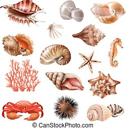 Seashell Realistic Set - Realistic set of different...